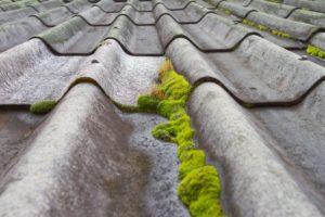 Mousse sur la toiture
